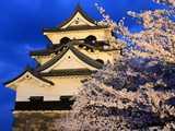 彦根城天守と夕桜