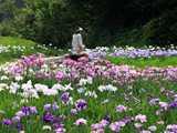 花菖蒲園を散歩する人