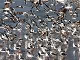 群れ飛ぶカモメ