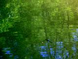 桃洞渓谷・緑陰のイワナ
