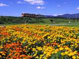 秋田内陸線と秋の花園