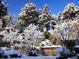 庭に名残り雪