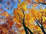 秋彩のブナ林