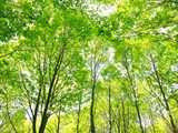 春色のブナ林