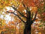 白神山地の主秋の彩