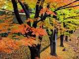 上田城秋美の欅並木