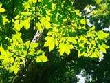 渓谷に輝く樹