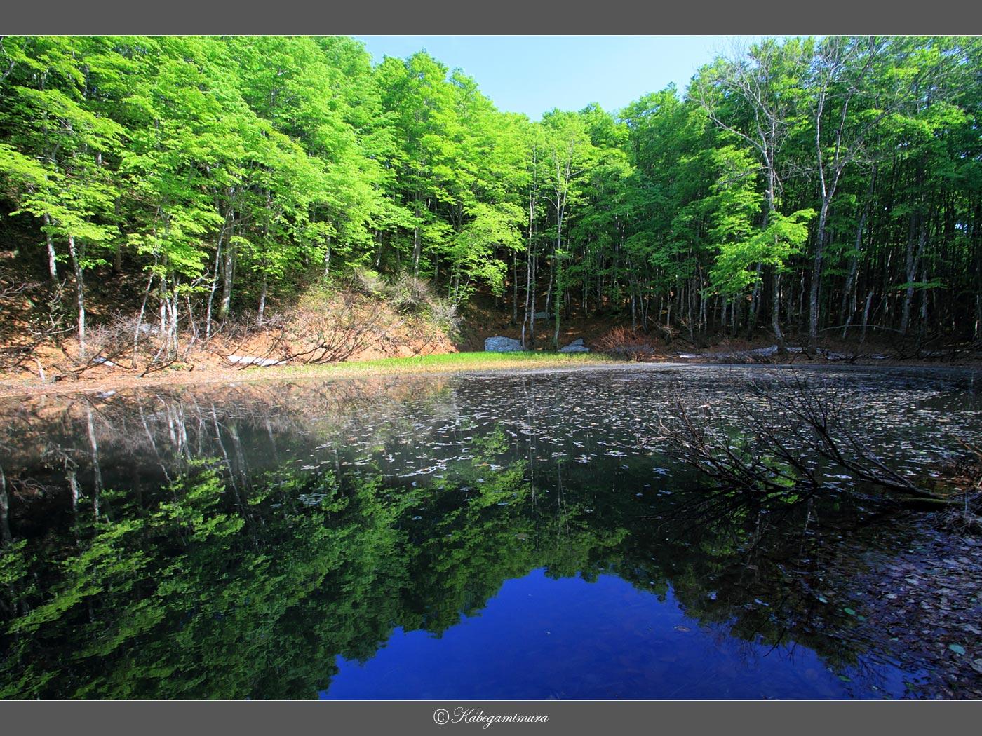 御嶽山頂直下の池に映ずるブナ林 | 壁紙自然派 - 楽天ブログ