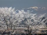 霧氷樹と奥羽山脈