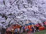 熊谷桜堤と屋台