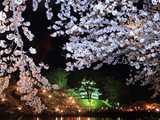 高田公園夜桜の彩り