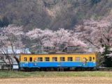 桜並木と由利高原鉄道