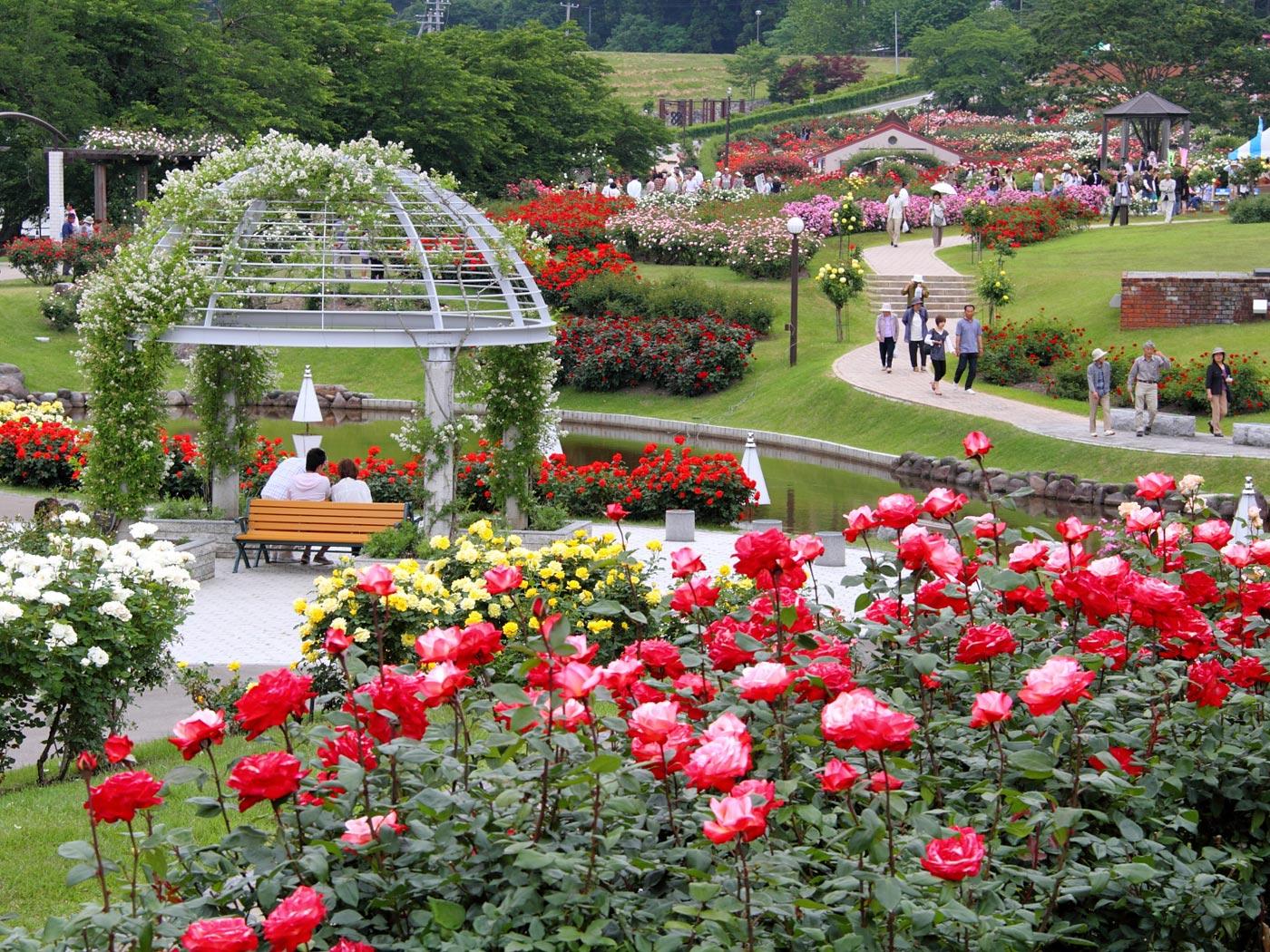 かおり風景100選の広大な東沢バラ公園 | 壁紙自然派 - 楽天ブログ