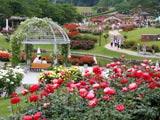 広大な東沢バラ公園