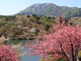 八重桜の八塩いこいの森と八塩山