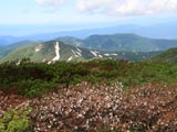 ミネザクラの焼石岳山頂から望む三森山