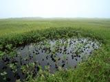 大白森と高層湿原