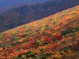 栗駒山・紅葉の山肌