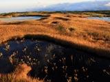 月山弥陀ヶ原・池塘の秋