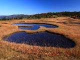 草紅葉真っ盛りの千沼ヶ原