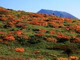 秋色の湯森山と岩手山