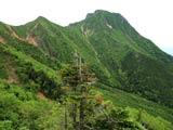 地蔵尾根の樹林帯と赤岳