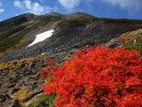 乗鞍岳山頂と紅葉樹