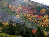 蓼科山・紅葉の天狗の露地