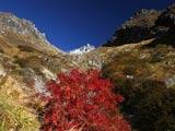 秋晴れの焼岳と紅葉ナナカマド