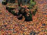 水心苑落ち葉の晩秋