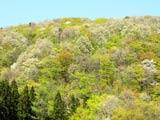 春萌えの出羽丘陵
