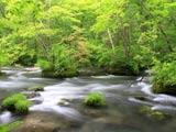 新緑の奥入瀬渓流石ヶ戸の流れ