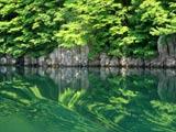 真夏の太平湖岸
