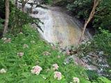 野草とカムイワッカ湯の滝