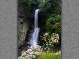 野菊と銚子の滝