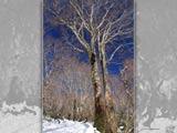 晩秋の森に雪