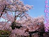 日本桜名所図会